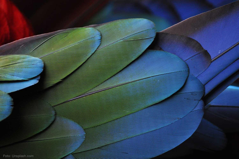 Papagei Federn